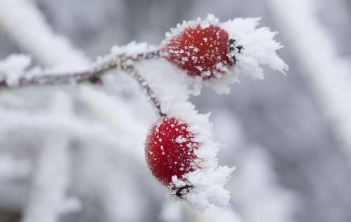 秋季最后一节令,霜降到